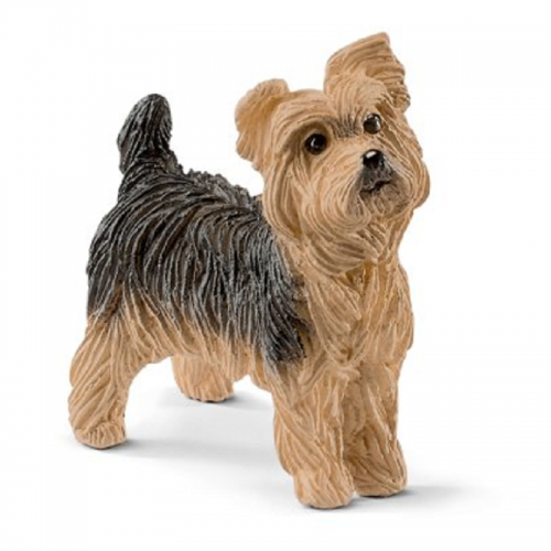 Cachorro yorkshire terrier disponible en www.happyeureka.com
